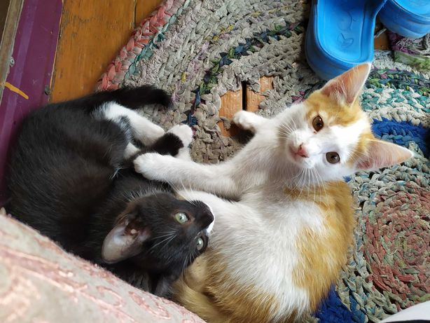 Котята 3 месяца 2 мальчика 2 девочки