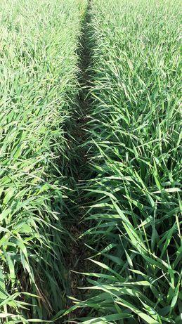 Preiau teren agricol in arenda sau activitate ferma partial sau total