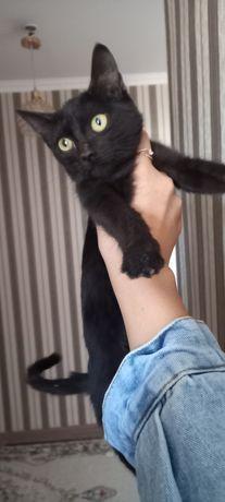 Котёнок девочка ласковая