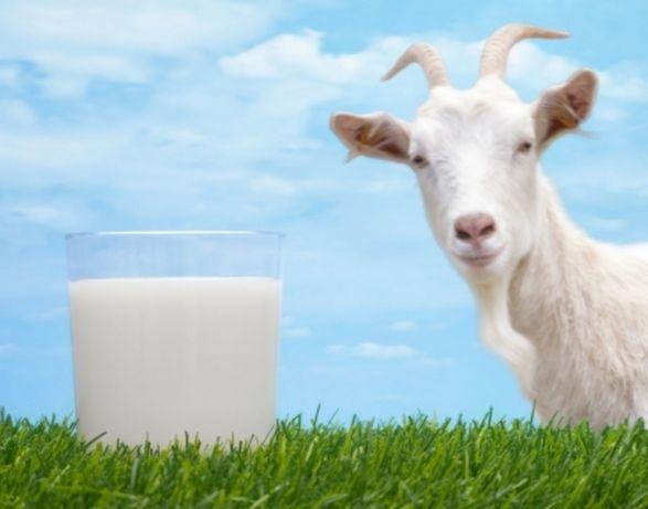 Lactate din capra