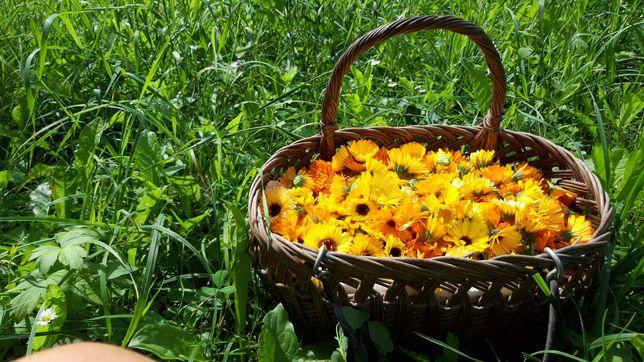 Flori de gălbenele