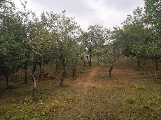 Teren de vanzare -Livada+teren arabil