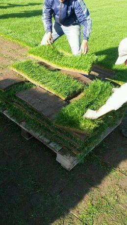 Рулонный газон в Алматы и обл. Подготовка почвы, укладка