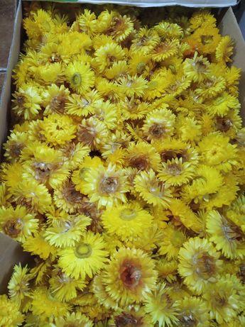 Flori de pai (uscate)