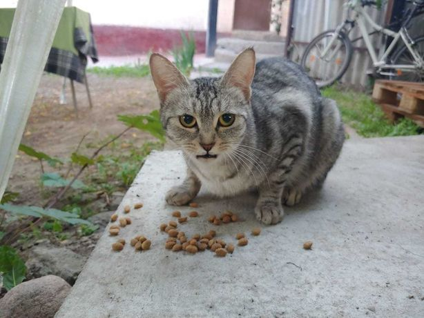 найдена кошка или отдадим в добрые руки