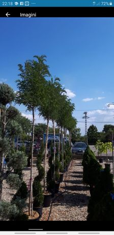 Vindem plantesi plantam diferite noante