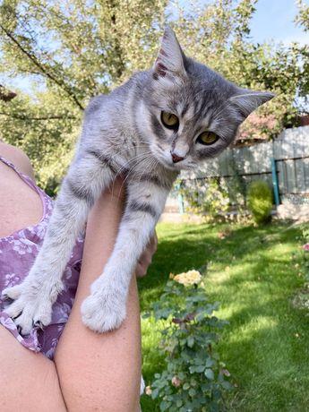 Кошка с котятами ищат дом или передержку.