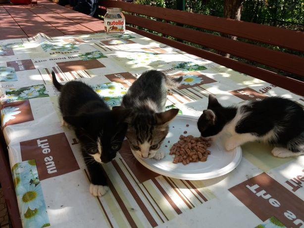Donație pisici