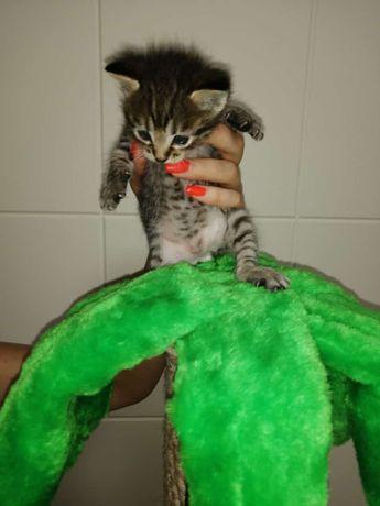 котята с подарком