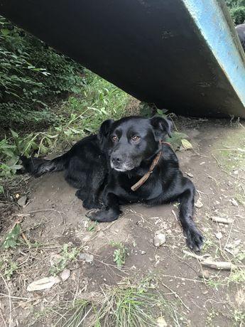 Пропавшая собака. Кто потерял?