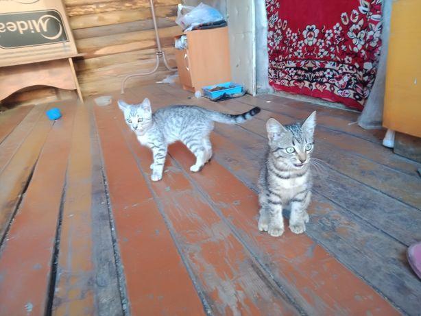 Отдам котят п.Солнечный