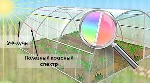 Российский Сотовый поликарбонат для теплиц и навесов с доставкой