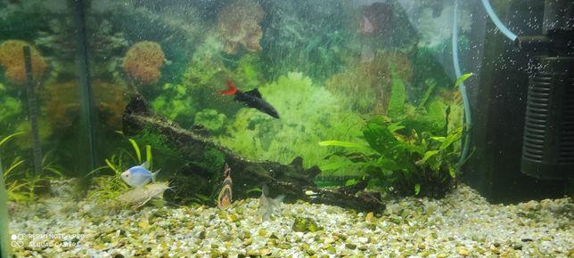 Acvariu cu pești