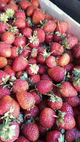 Ягоды свежие клубника,  малина, вишня, слива, Смородина,  абрикосы
