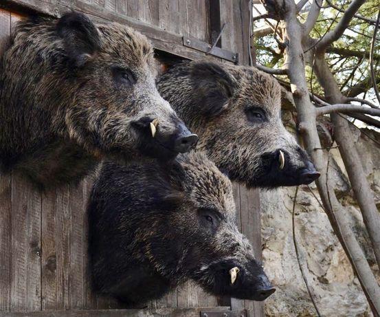 Препариране на животни,изработка на ловни трофеи