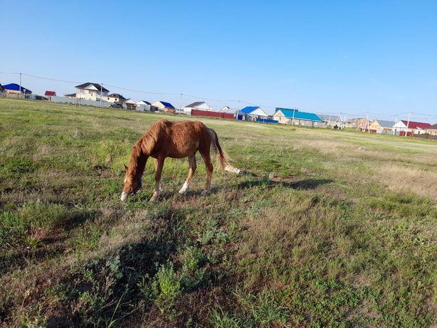 Продам лошадь жеребчик