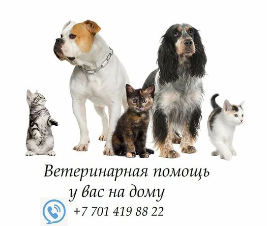 Ветеринар Атырау