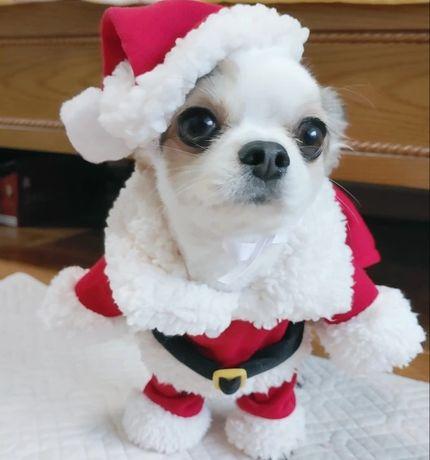 Costumas animalut Crăciun