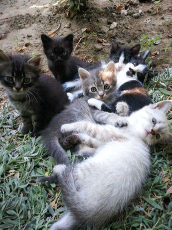 Pisicuți drăgălași și iubibili