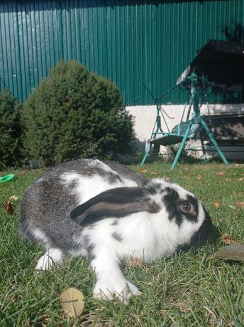 Мясо кролика. Тушенка из кролика
