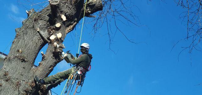 Taiere copaci, toaletare crengi cu risc, alpinisti utilitari
