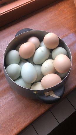 Яйца от черных кур с доставкой