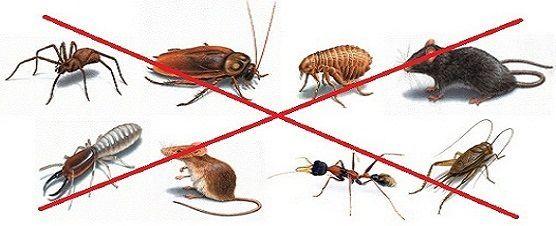 Борба с всички видове пълзящи и летящи насекоми и гризачи- вредители н