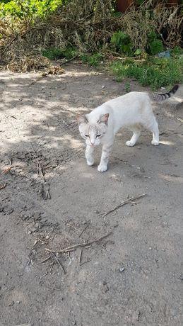 Кошечка подросток 4-5 мес ищет добрые ручки