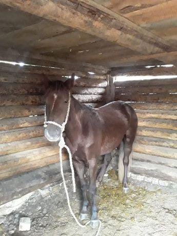Продам лошадь 3 года