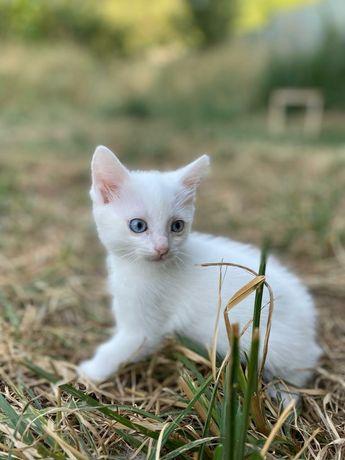 Отдам котят рожденные на Пасху