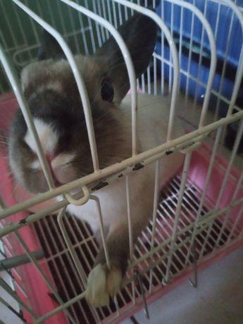 Продам кролика! Девочка, 1 год, любит помидорки и когда её чешут)