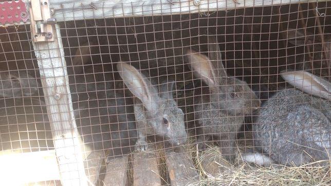 Продам кроликов, возраст разные