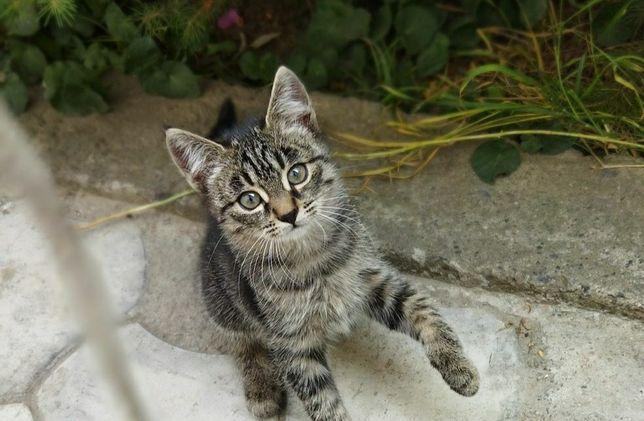 Котенок девочка :)