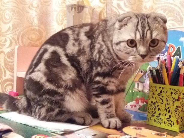 Кот для вязки! 10000тенге