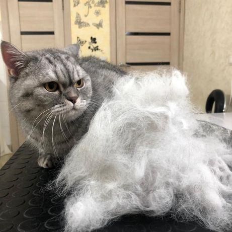 Экспресс линька для кошек