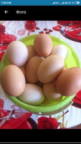 Продаются свежие домашние яйца