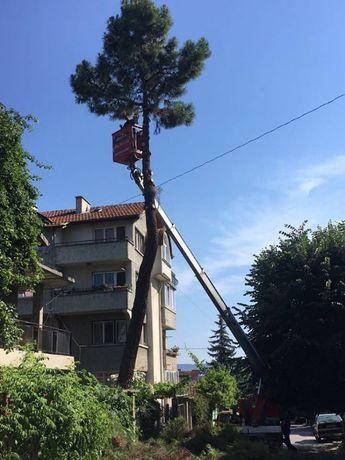Рязане на дървета , Косене на трева, почистване на терени Варна гр. Варна - image 6