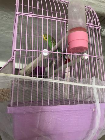 попугай(девочка)