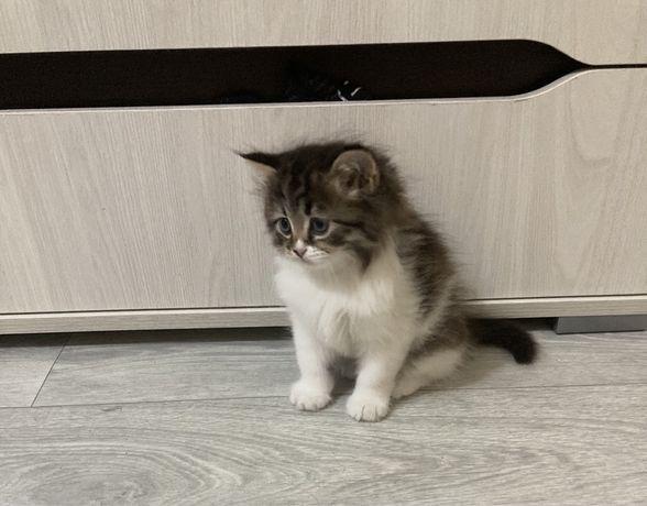 Отдам котят девочек