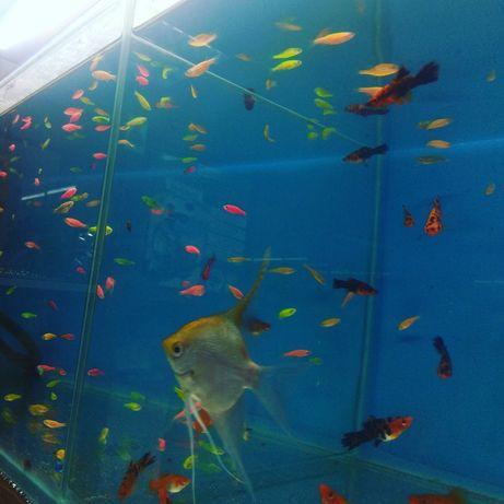 Аквариумные рыбки(НавоиТорайгырова)