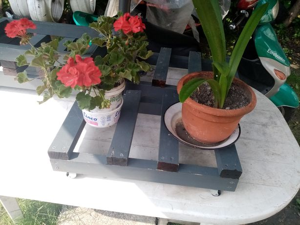Suporti cu roti 50cm pe 32cm pentru ghivece de flori