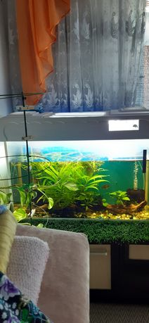 Продам 2 аквариума с Рыбками и все что на фото полностью укомплектован