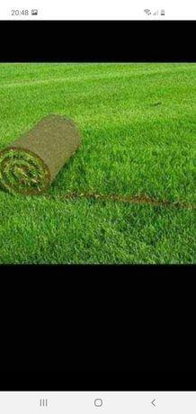 amenajam gradini cu gazon si plante