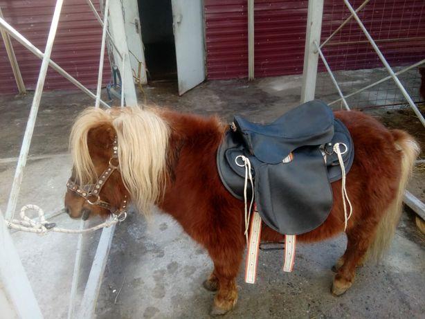 Лошади , прогулки, пони. С 11:00ч до 20:00ч.