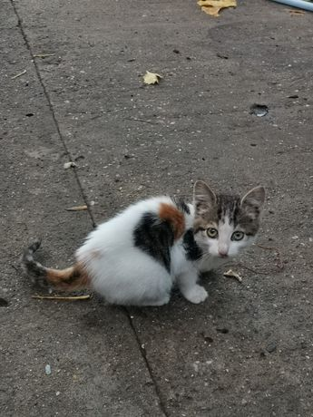 Pisica cu pata in forma de inimioara