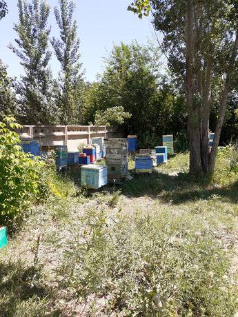 Табиғи балғын бал! Натуральный свежий мёд.
