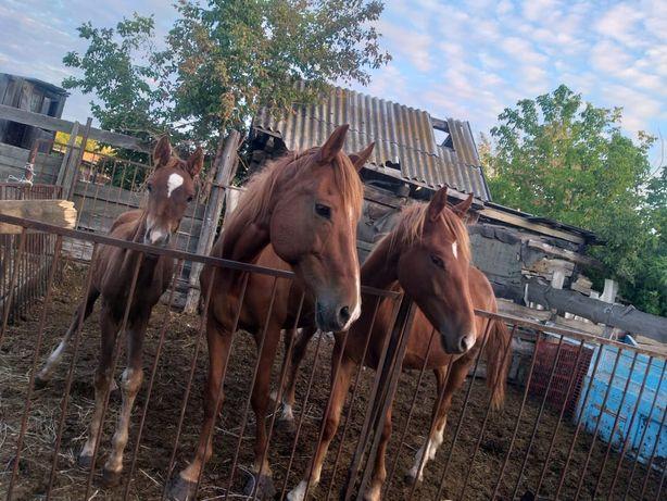 Продам лошадей .