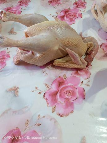 Цыплята от кг до 1,5кг