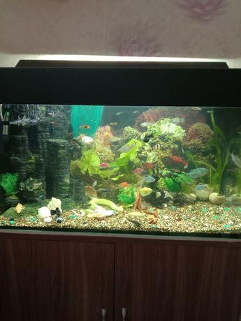 Продам большой красивый аквариум