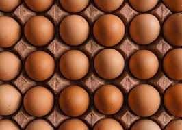 Инкубационные яйца Ломан браун.